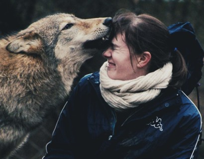 hungarian-wolves-header1
